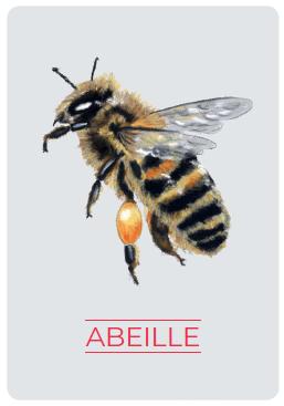 Anna Edery est une abeille pollinisatrice